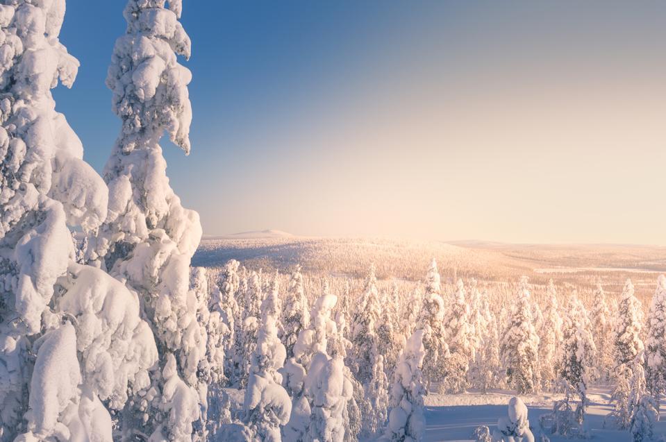 Finland Lapland Visit Levi Halipuu Kittilä Tree Hugging Forest RiittaRaekallio-Wunderink