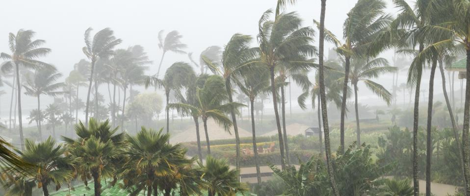 Palm trees blowing in the wind and rain as a hurricane approaches a tropical island