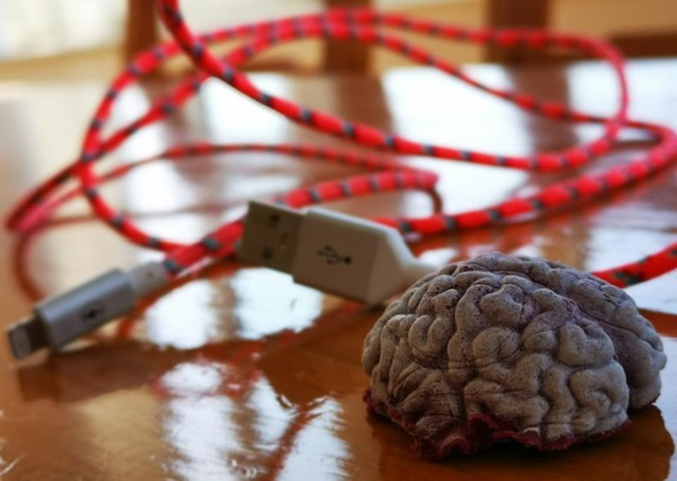 A rubber brain next to a USB cable on a table.