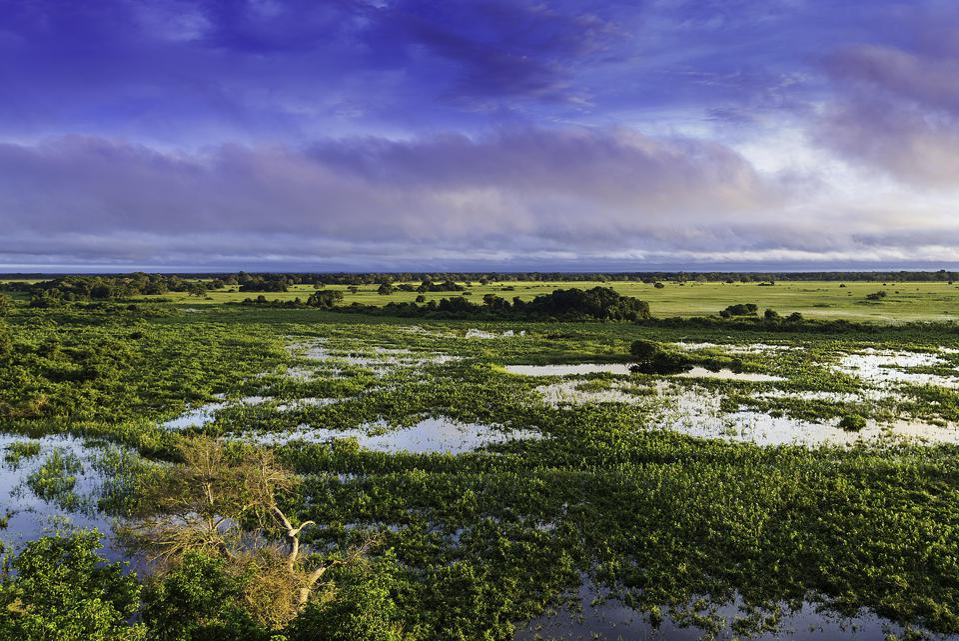 1617px-Pantanal,_Mato_Grosso,_Brasil