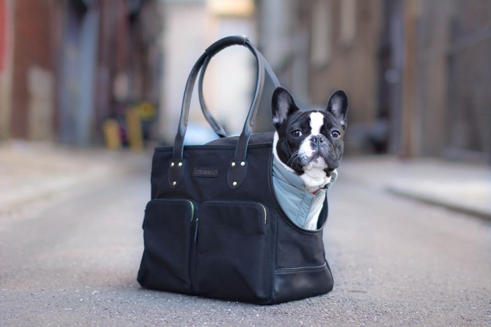 A Boston terrier in a Django pet tote