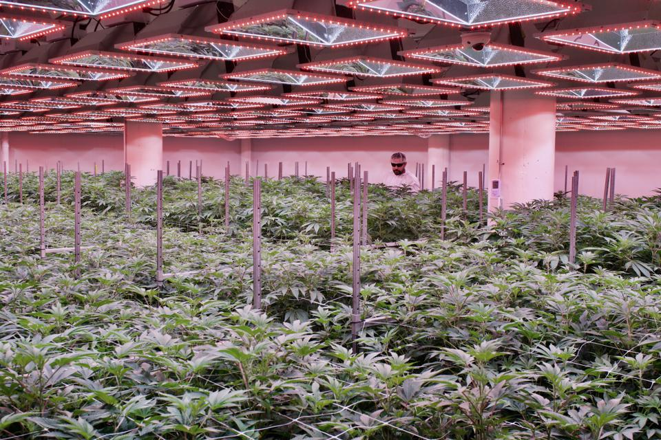 the indoor cultivation house