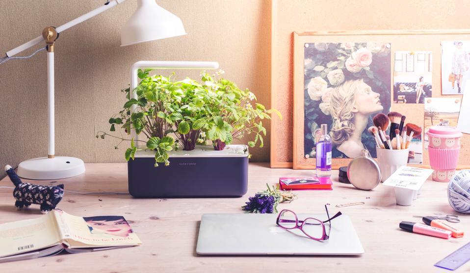 A three-pod Click and Grow garden on a home office desk