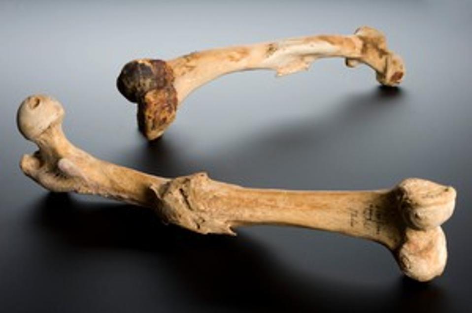 Human left femur, Tell Fara, Palestine, 100 BCE-200 CE