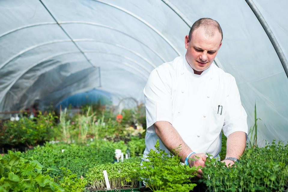 Steven Titman, Executive Chef at Summer Lodge Country House Hotel & Restaurant, is seen above in the  Summer Lodge Poly Tunnel where much of the hotel's seasonal fruit, vegetables and herbs are grown.