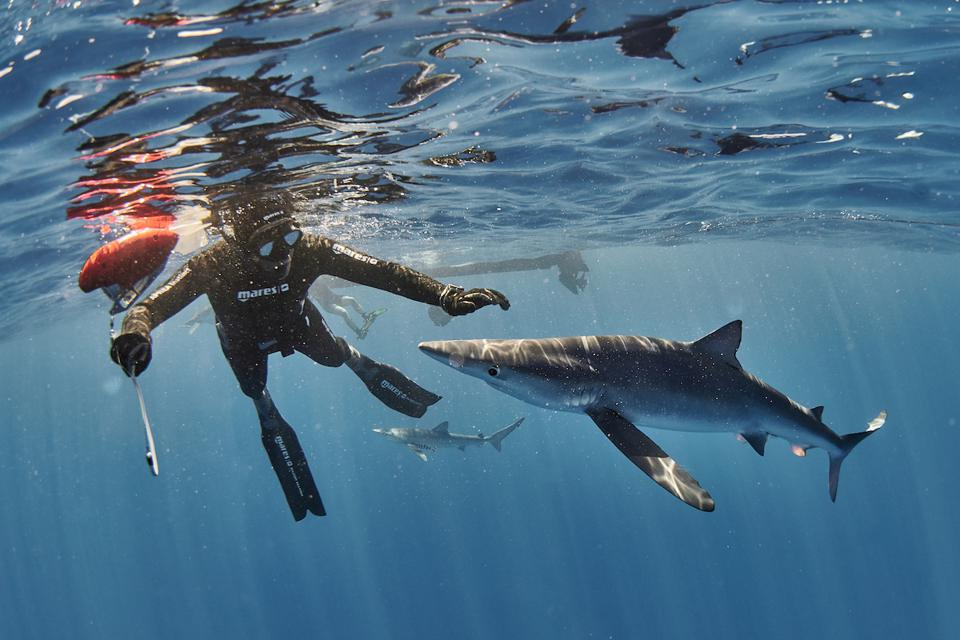 Ulysse Nardin, blue sharks, Fred Buyle