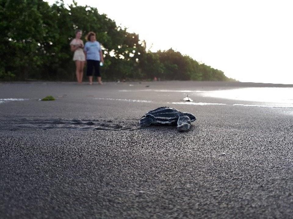 LAST (Latin American Sea Turtles Association)