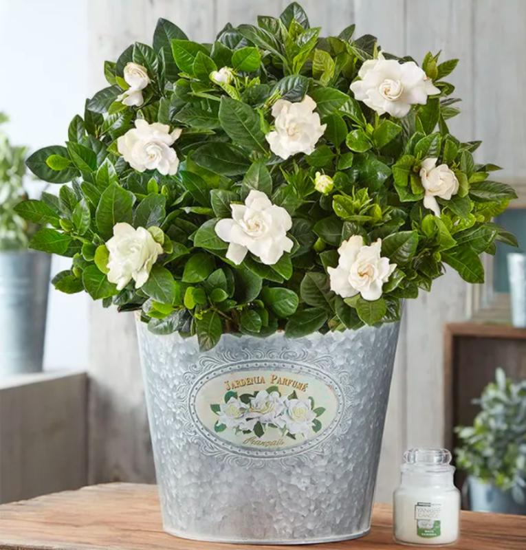 Mother S Day Gift Guide The Best Flower Delivery Services