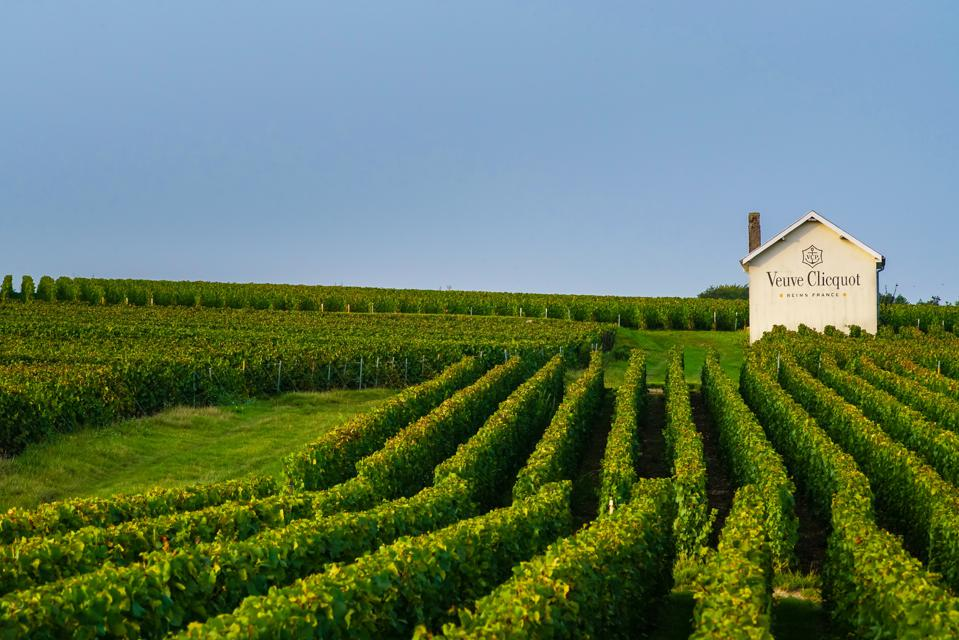 green vineyards in Champagne, Earth Day