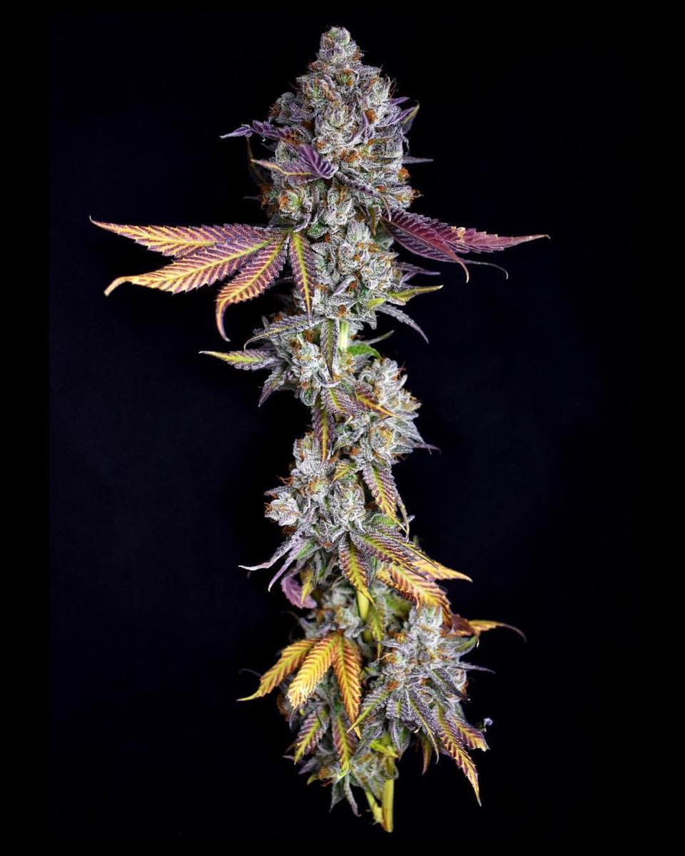 DRO Flower Sour Kush