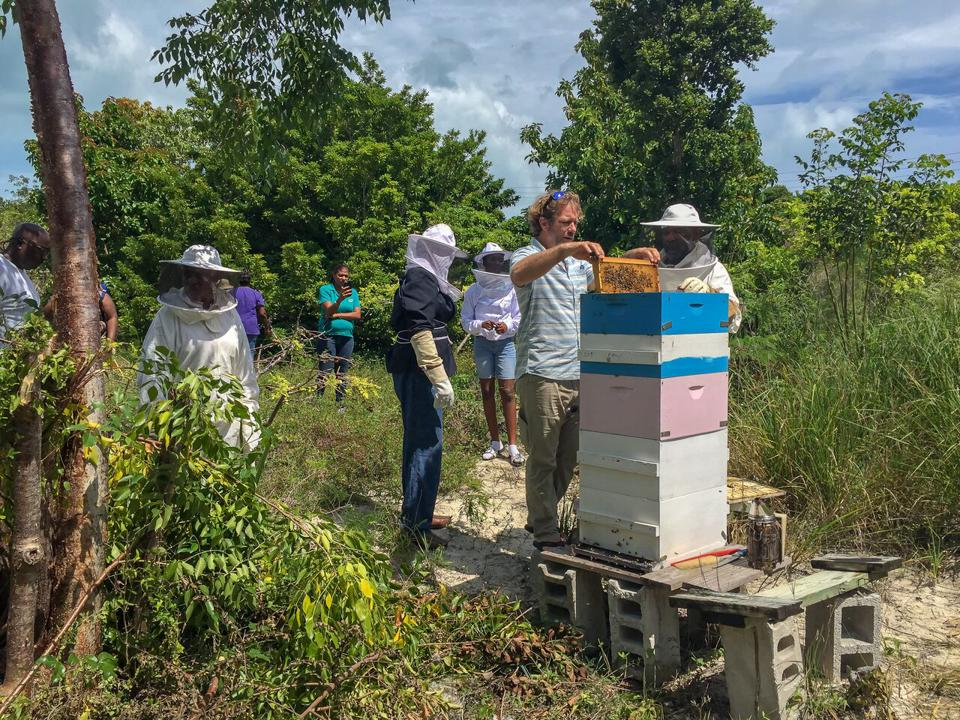 Ted Dennard and others tending a hive