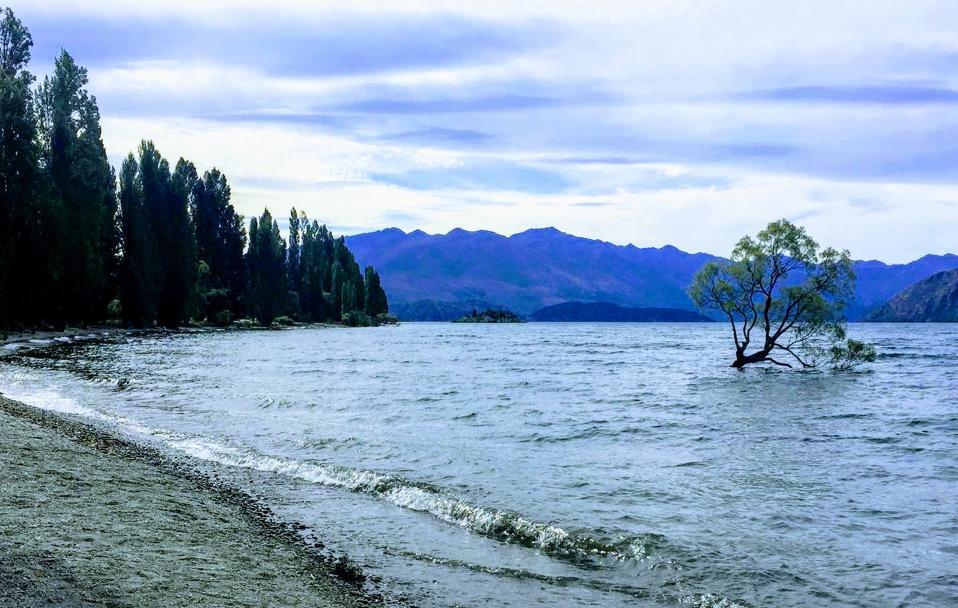 Wanaka Tree, South Island, New Zealand