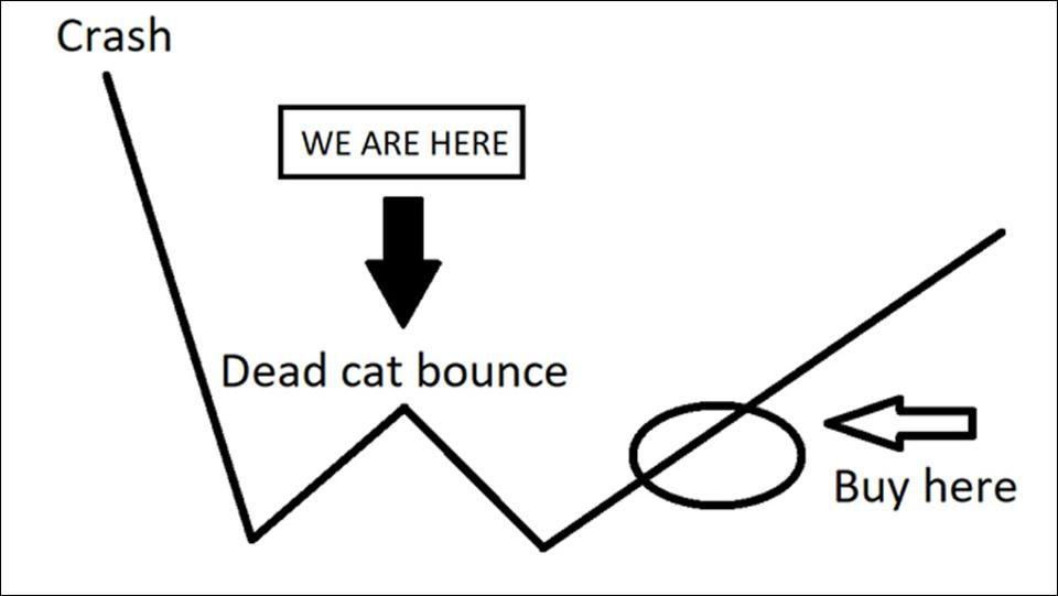 We are at the dead cat bounce stage of the crash