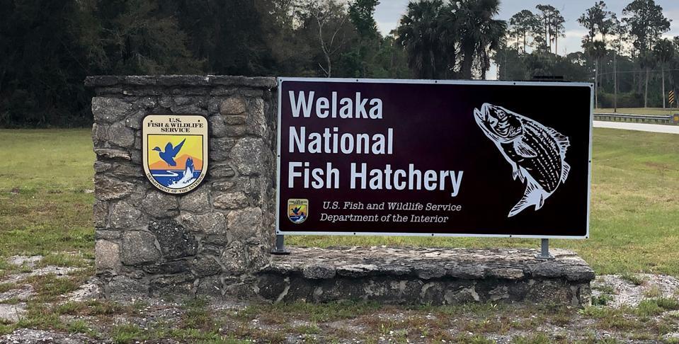 Welaka National Fish Hatchery in Florida USA