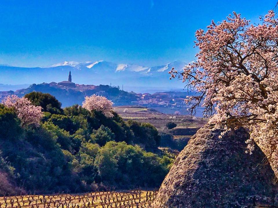 View of Rioja Wine Region