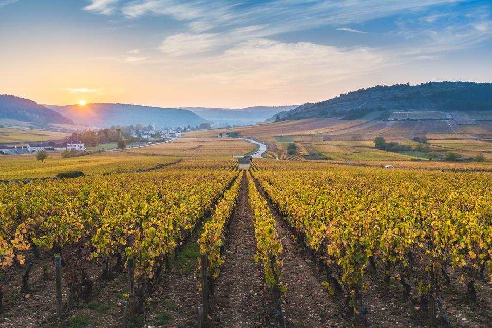 Vineyards in autumn at sunset, Burgundy, France