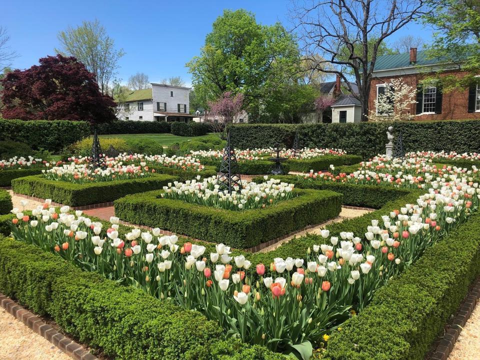Tulip garden at Inn at Little Washington