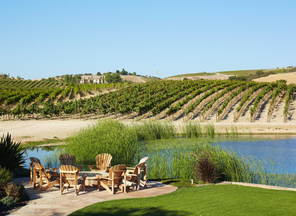 Vineyards in Paso Robles