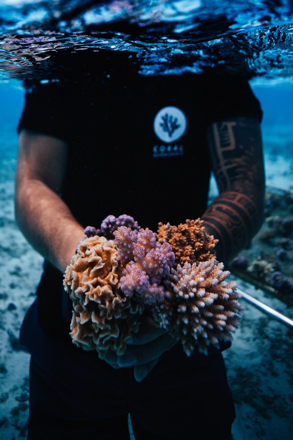 Ryan Borne/The Coral Gardeners