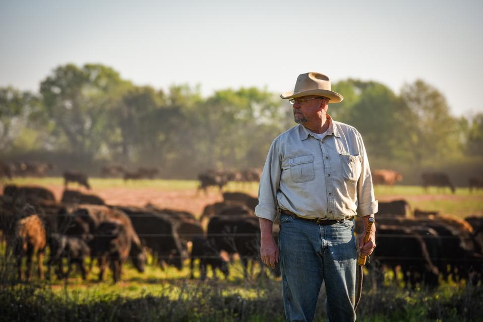 Will Harris runs White Oak Pastures, a regenerative farm in Bulffton, Georgia.