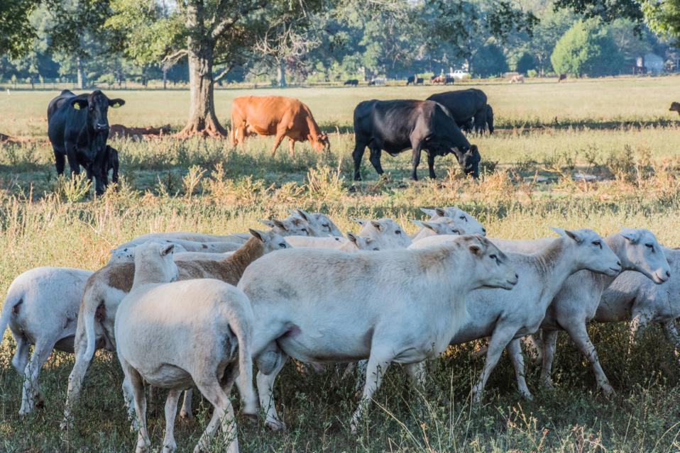 White Oak raises ten different species on its 3,200 acres.