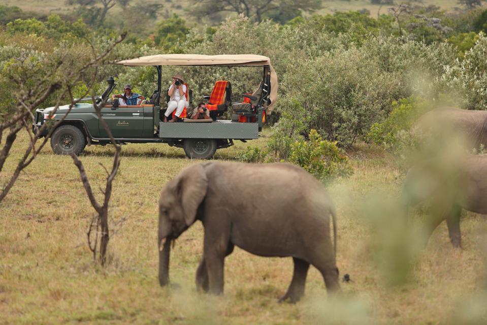 Asilia Africa Naboisho safari elephant