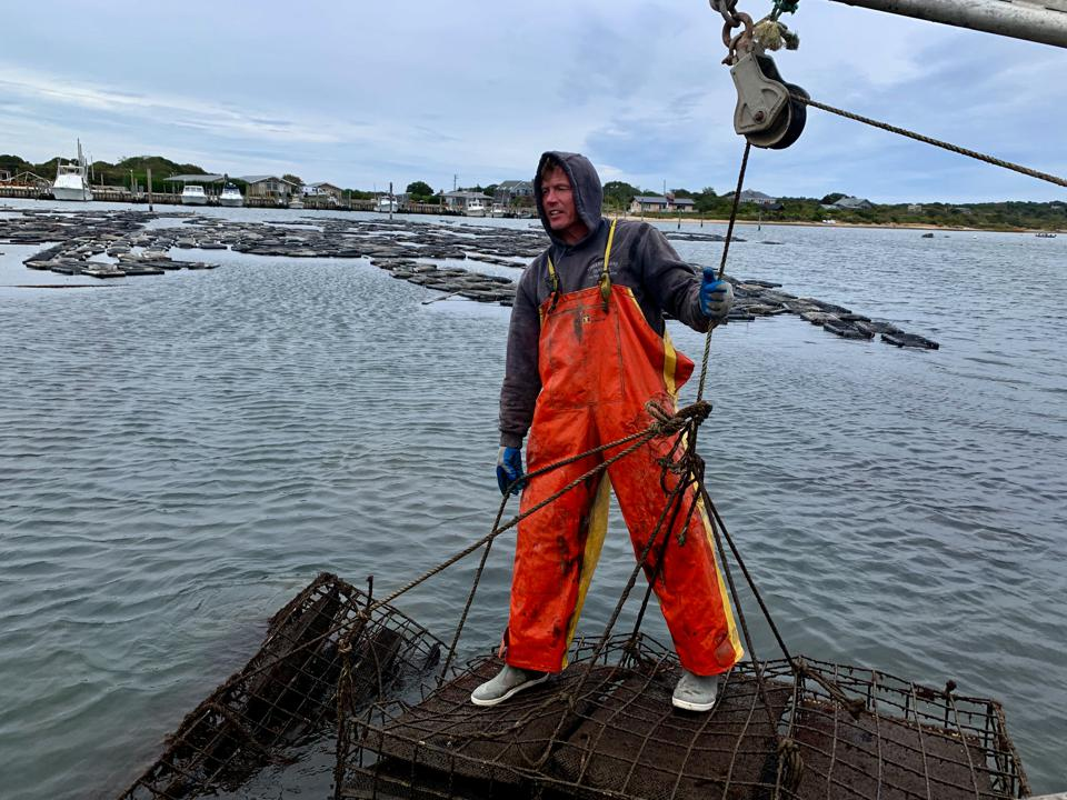 Oyster farmer Mike Martinsen off Montauk where his floating farm takes advantage of the clean waters