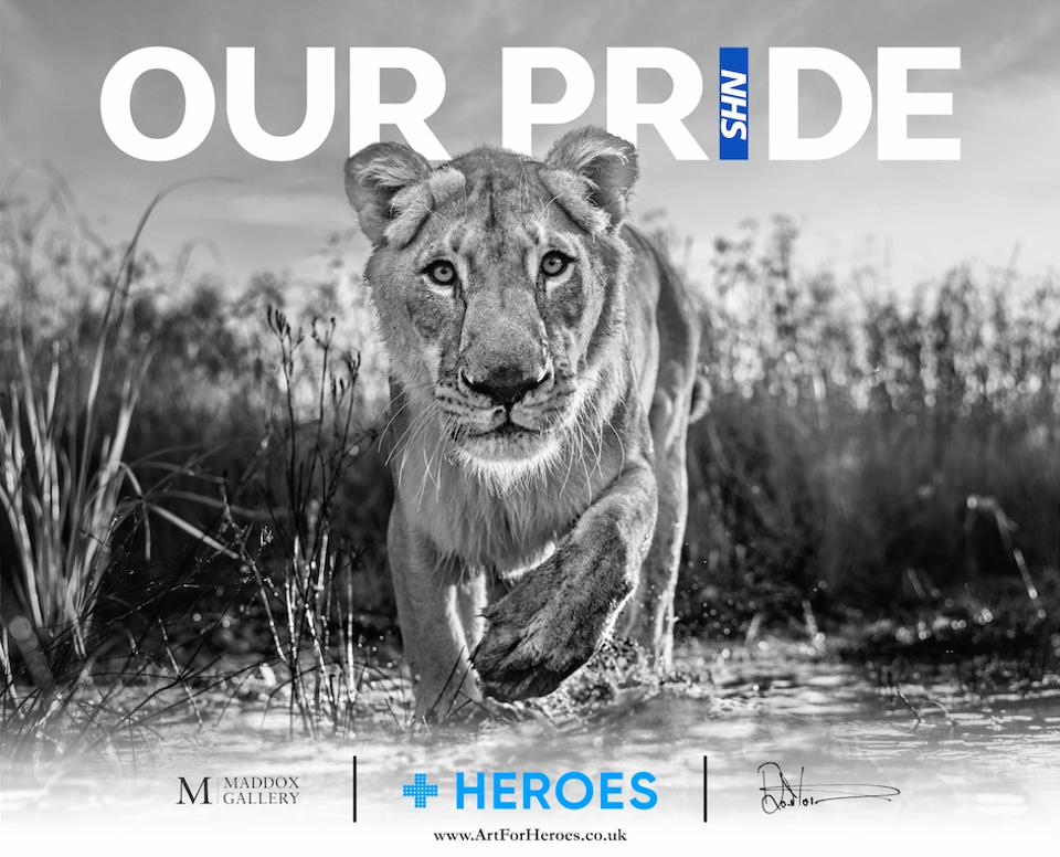 Our Pride photograph by David Yarrow