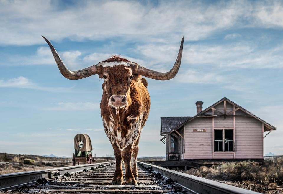 One of the photographs in David Yarrow's new Texas Series.