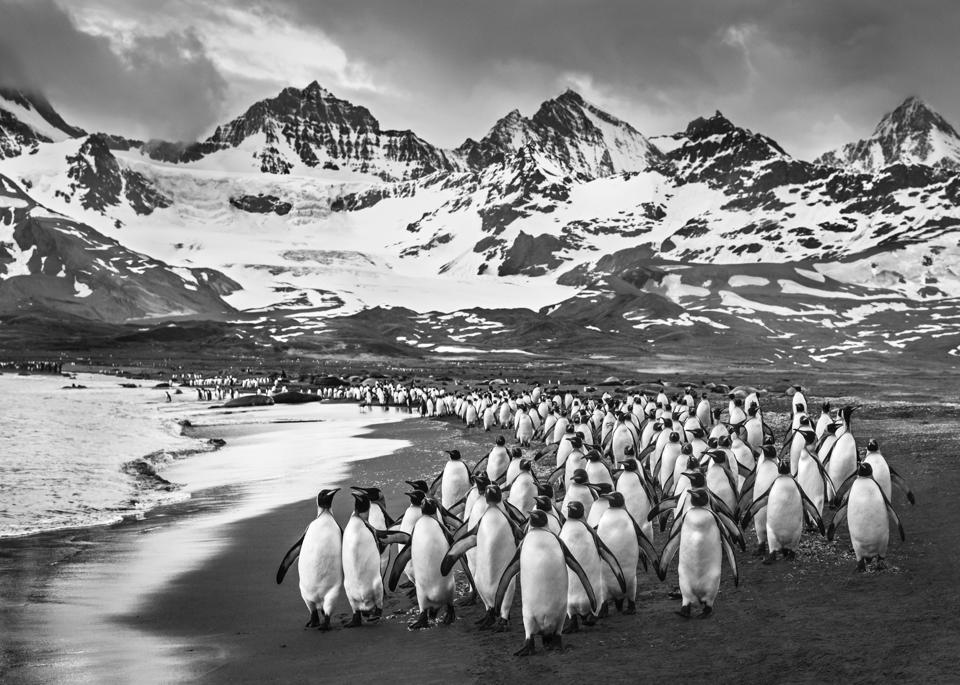 The Breakfast Club, an image from David Yarrow's 2019 coffee table book.