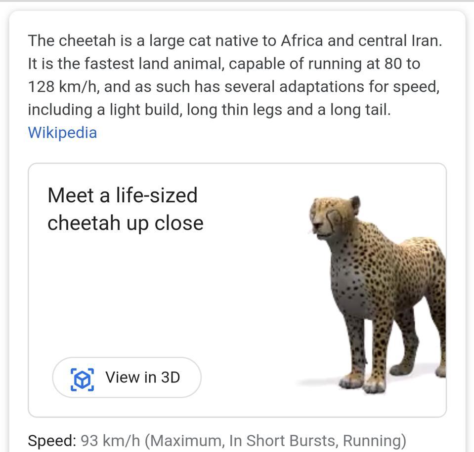 Google 3D meet a cheetah