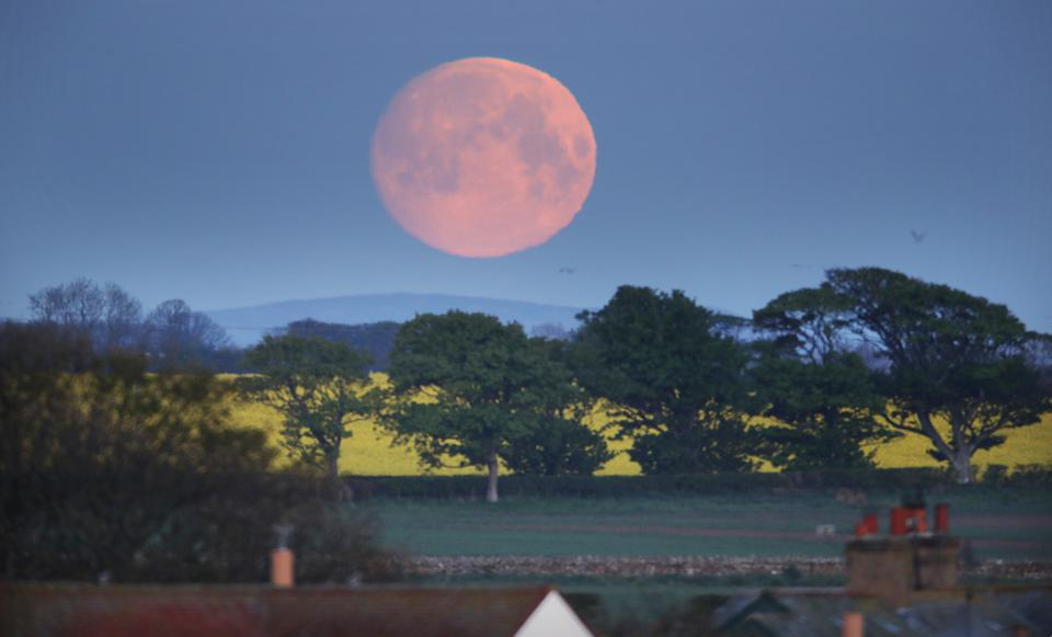 Flower moon in Northumberland, Great Britain.