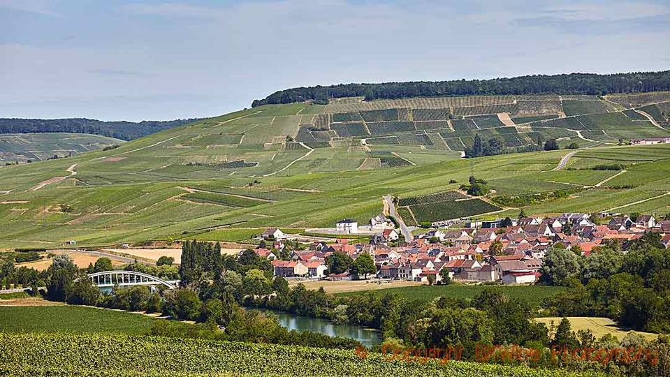 Vineyards on the slopes of the Marne Valley in Champagne