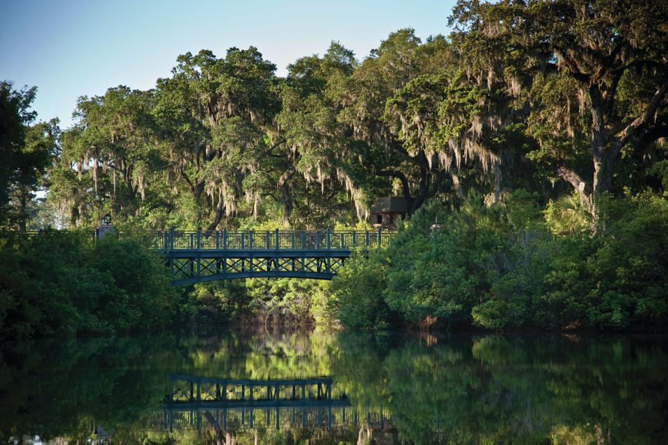 Throughout Palmetto Bluff there are mature trees, including southern magnolias, red oak, eastern red cedar and towering live oaks trees that are dramatically and beautifully draped in Spanish moss.