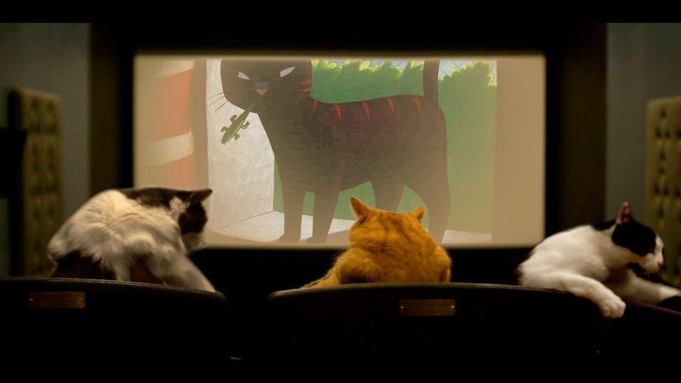 Quarantine, Cat Film Festival, coronavirus, COVID-19, cat videos, film festival, movies
