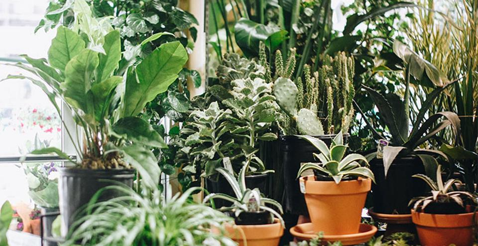 An array of plants from PlantShed.