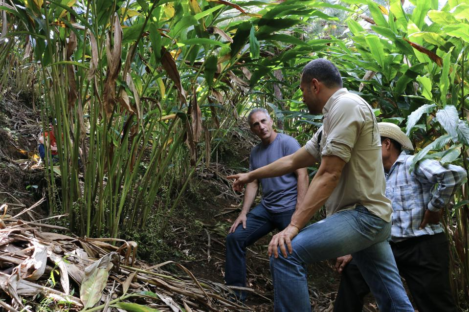 Frontier CEO Tony Bedard visiting a long-standing cardamom partner in Guatemala.