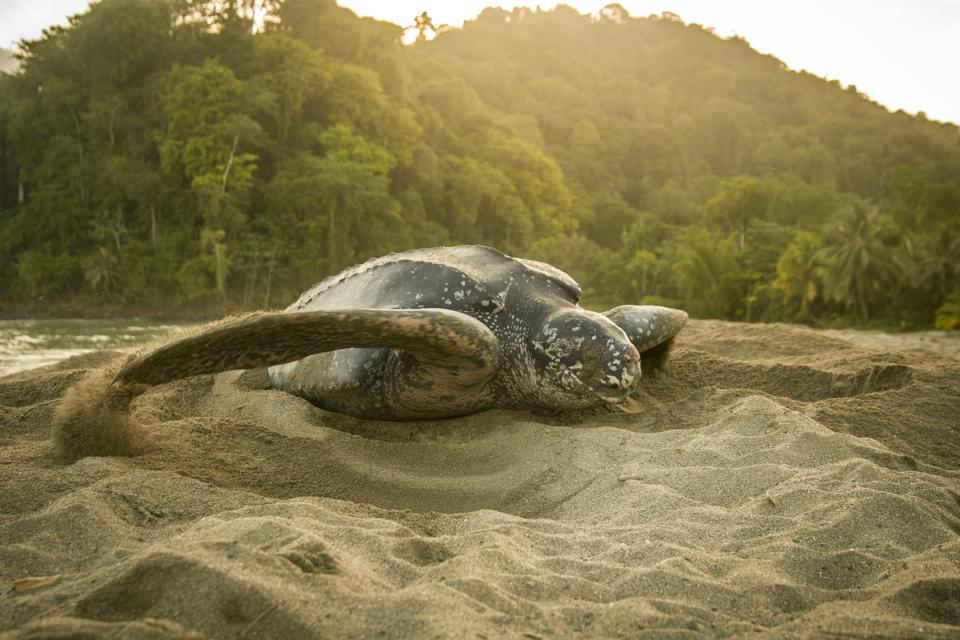 Turtle in sand