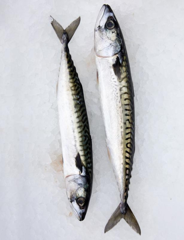 Fish produce at The Notting Hill Fish Shop