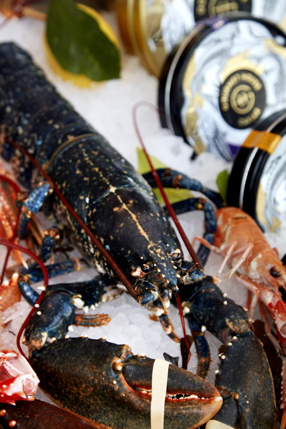 Lobster at the Notting Hill Fish Shop