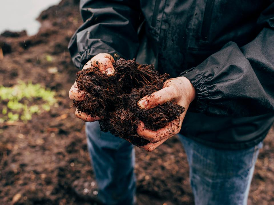 Man's hands holding a clumo of fresh peat