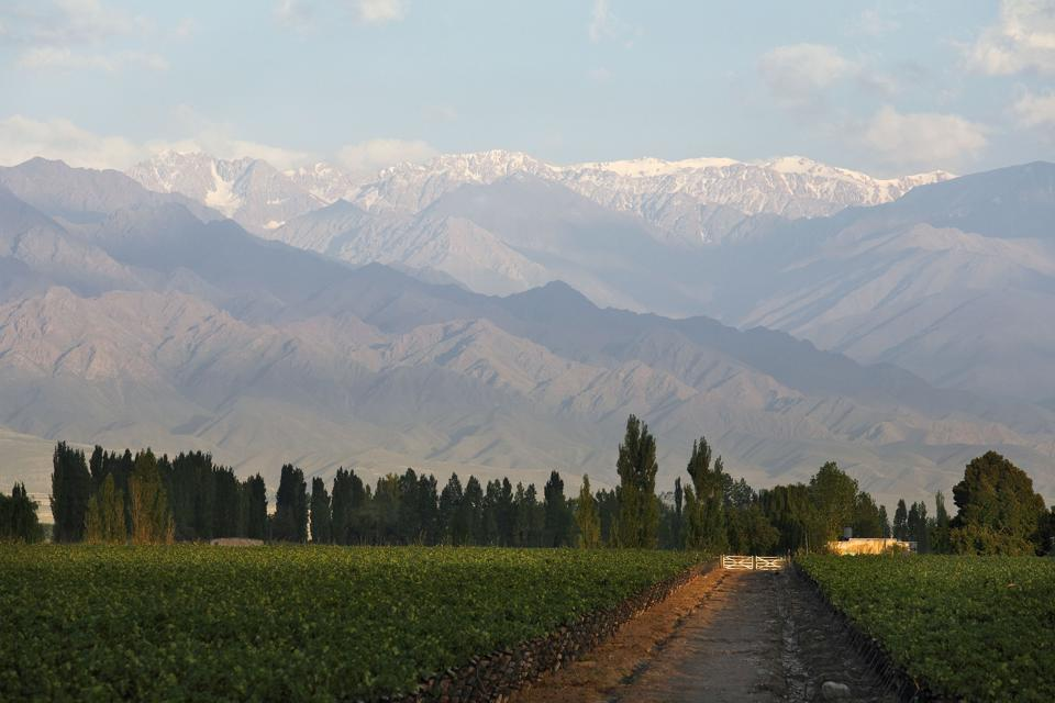 Zuccardi Vineyards in Mendoza, Argentina's Uco Valley, at the foot of the Andes Mountains