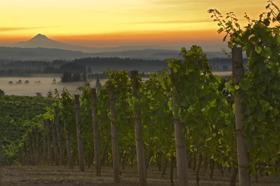 Mount Hood is in the distant from this vineyard in Willamette Valley.
