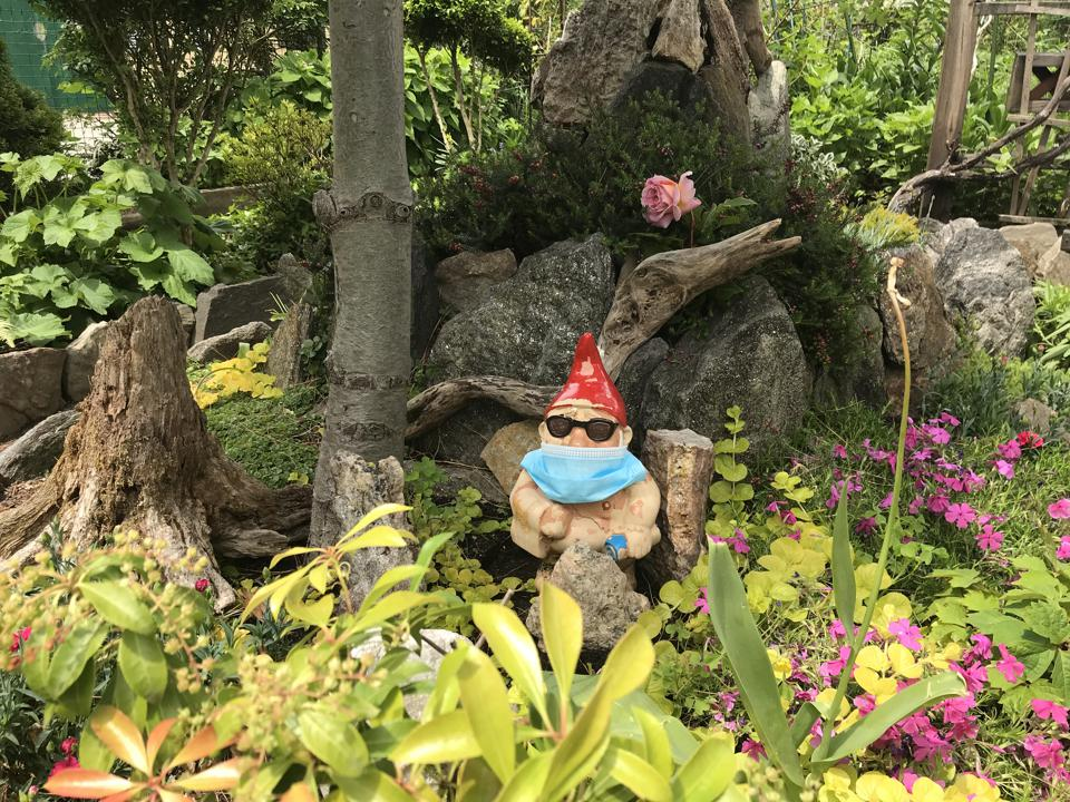 A garden gnome standing in a lush garden setting, wearing only. a red pointy head, sunglasses and a mask.