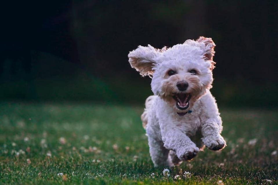 Chi Dog: Human Grade Dog Food
