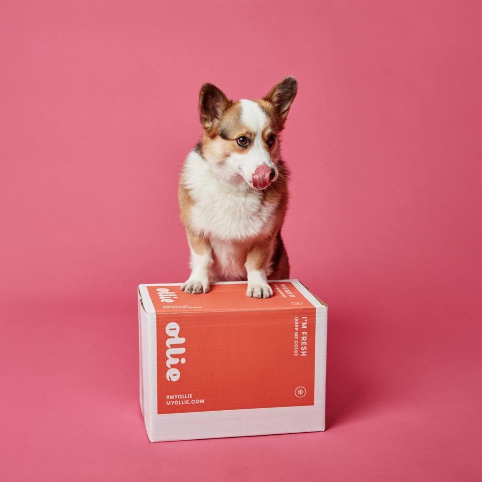 Ollie: Healthier Food for a Healthier Dog