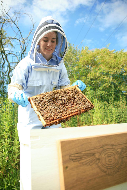 Honey making at the Bentley HQ in Crewe, UK