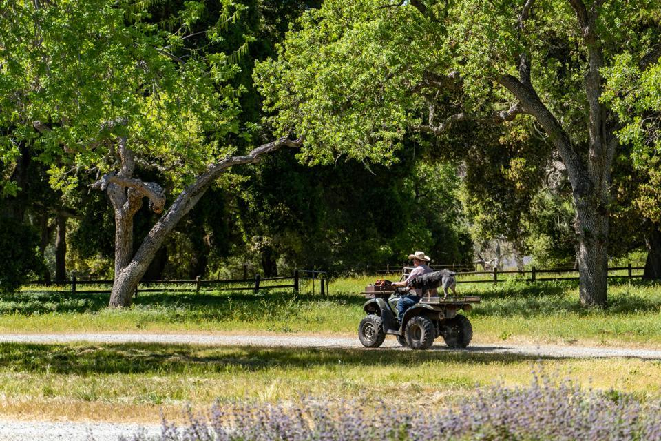 Riding a four-wheeler at a ranch