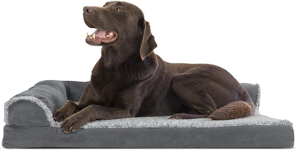Furhaven Dog Bed Deluxe Orthopedic Two-Tone Plush Faux Fur & Suede with happy chocolate labrador dog