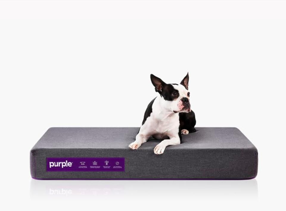 The Purple Pet Bed, Medium, with brown dog sleeping on top